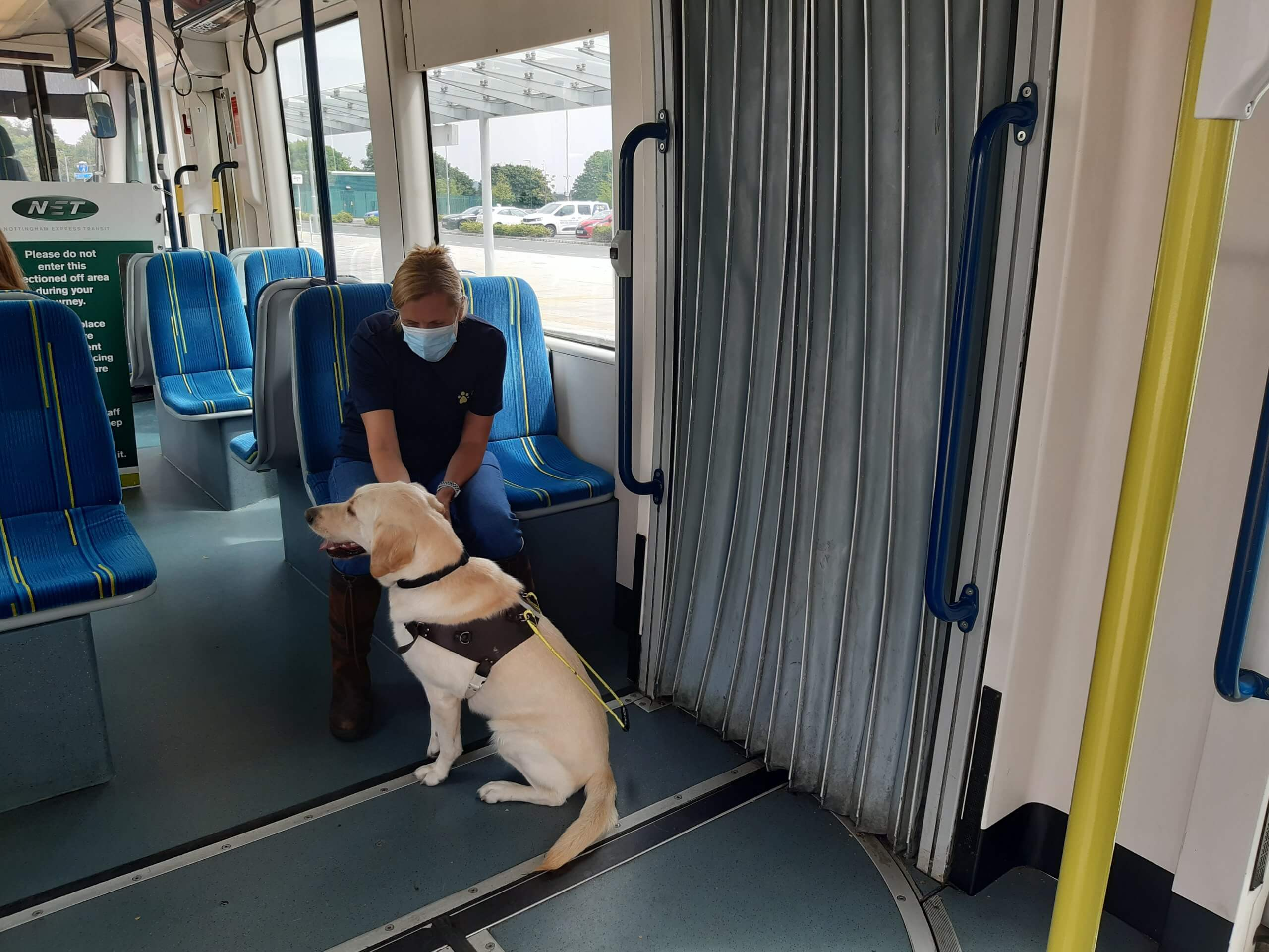A guide dog training on a tram