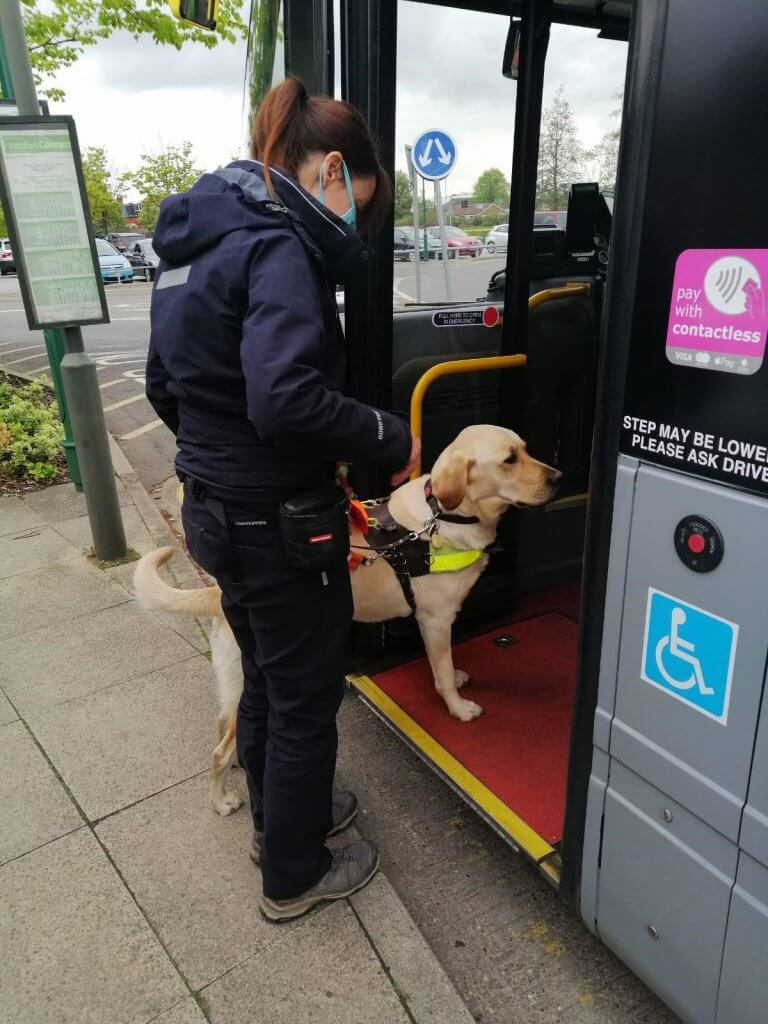 A guide dog training on a bus